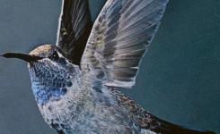 Voorplat van het boek 'De kolibrie' van Sandro Veronesi