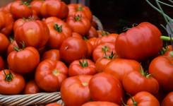 Foto van enkele kilo's rijpe tomaten