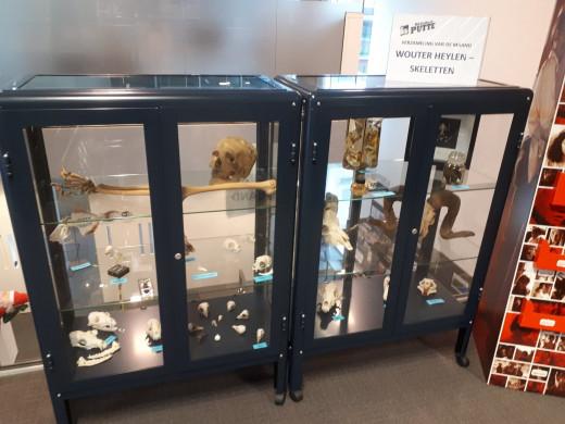 Foto van de tentoonstellingskastjes met schedels en beenderen